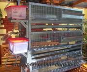 Оборудование для перепелиной фермы.