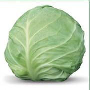 Семена белокочанной капусты AKIRA  F1 / АКИРА F1 (Китано)